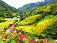 Home - Tourism North East - North West [Cao Bang - East Nguom Clams - Waterfall buying things Hello - Ba - Ha Noi - Ha Long]