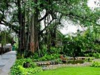 Home - Tourism river [Binh Quoi Tourist Village]