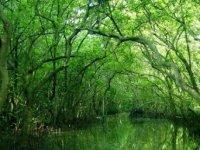 Home - Tourism river [Gio Mangrove Forest - Vam Sat]