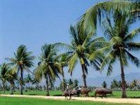 Home - Tourism river [Mekong Delta - Long An]